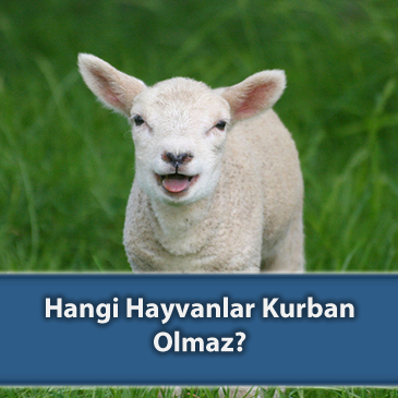 Hangi Hayvanlar Kurban Olmaz?