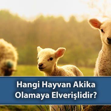 Hangi Hayvan Akika Olamaya Elverişlidir?