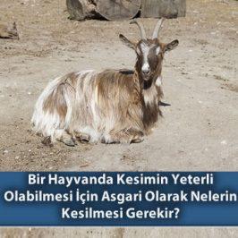 Bir Hayvanda Kesimin yeterli Olabilmesi için Asgari Olarak Nelerin Kesilmesi Gerekir?
